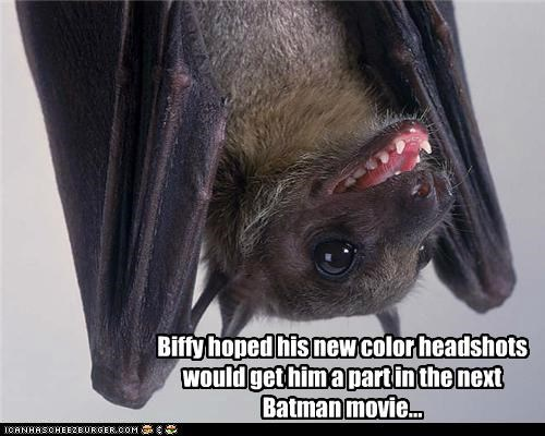 actors,animals,batman,bats,head shots,I Can Has Cheezburger,movies,upside down
