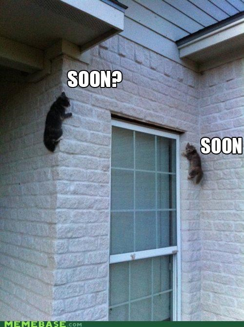 Cats eventually SOON sooooon wall - 5013956096