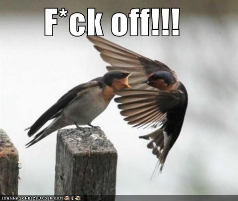 animals birds I Can Has Cheezburger mean yelling - 5014216704