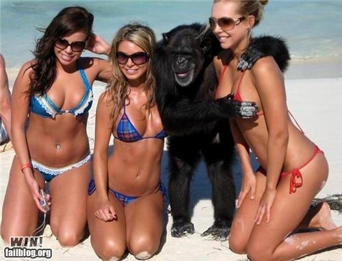 animals,beach,boys will be boys,monkey