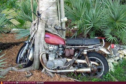 amazing motocycle nature tree wtf
