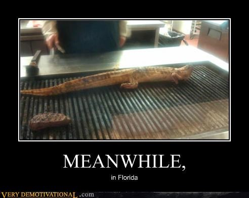 florida hilarious lizard Meanwhile