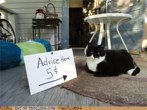 advice,cat,five cents,IRL,kitty,mean