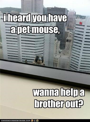 i heard you have a pet mouse, wanna help a brother out?