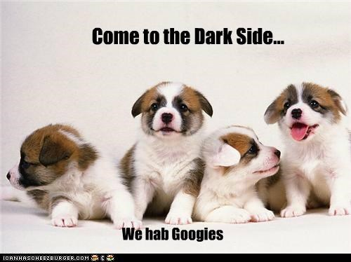 border collie cookies cute faces dark side evil puppies - 5016535552