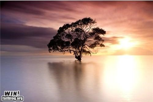 mother nature ftw,ocean,photography,tree