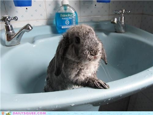 bath bath time Bunday bunny do not want happy happy bunday rabbit reader squees soggy - 5016896000