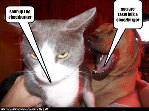 Cheezburger Image 5017240832