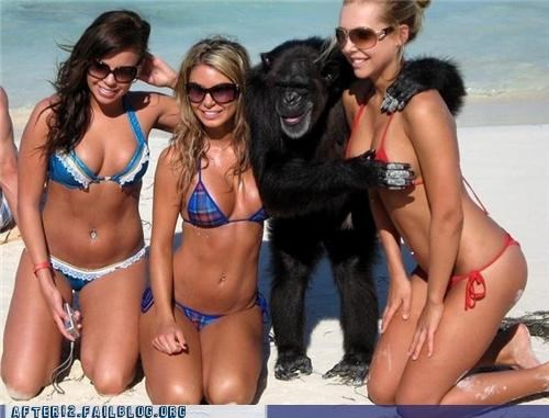 beach,bikini,missing link,monkey