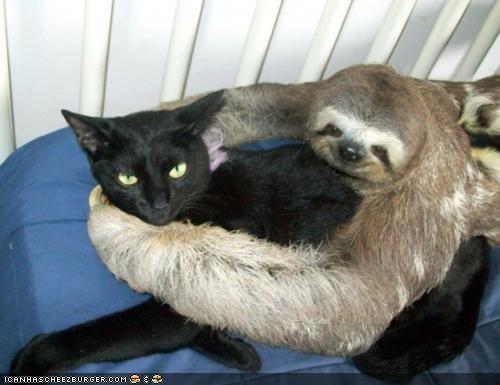 cyoot kitteh of teh day hug Interspecies Love sloth sloths wtf - 5017329664