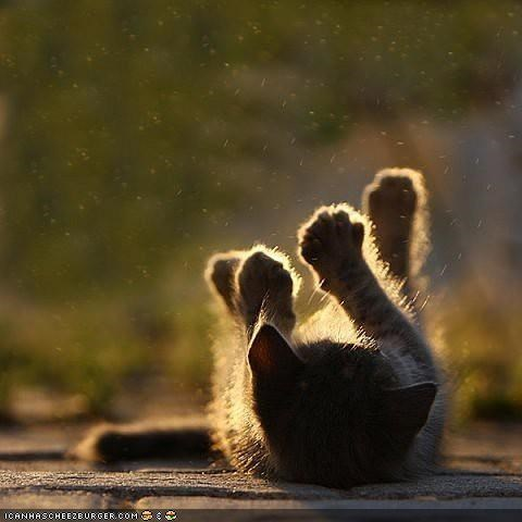 cyoot kitteh of teh day,legs up,on back,outside,sun,sunbathing