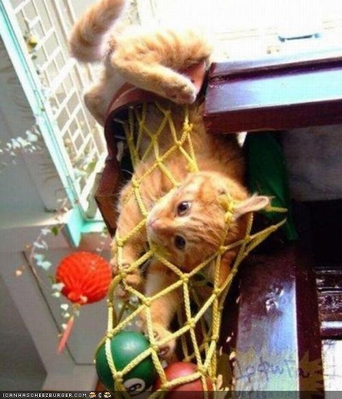 cyoot kitteh of teh day,get out of there cat,net,oh noez,pool table,stuck