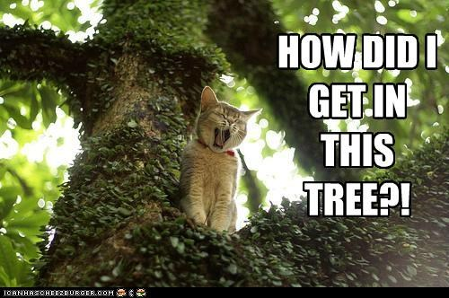 caption captioned cat confused get how kitten question shouting stuck tree yelling - 5017428224
