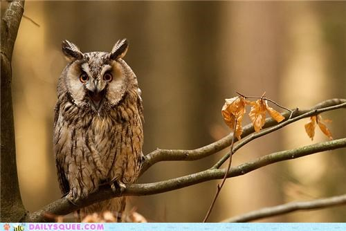 cannot Hall of Fame Owl pun reflection shocked squee unsee