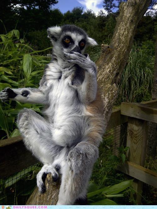 acting like animals crude embarrassed embarrassing explanation food gas lemur pardon me stomach upset - 5017679104