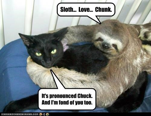 animals Cats chunk fondness I Can Has Cheezburger Interspecies Love love sloths