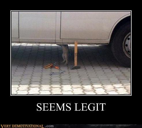 car cat hilarious jack seems legit - 5018691840