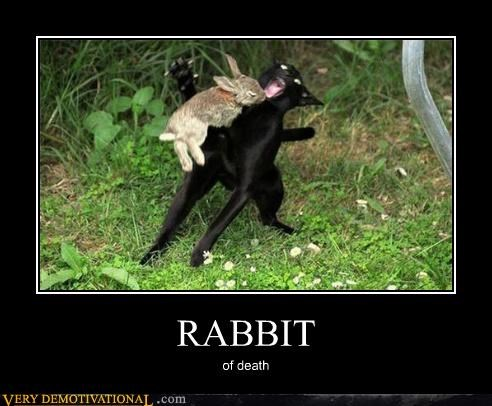animals cat dangerous monty python Pure Awesome rabbit - 5018732544