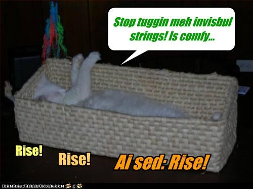 Stop tuggin meh invisbul strings! Is comfy... Rise! Rise! Ai sed: Rise!