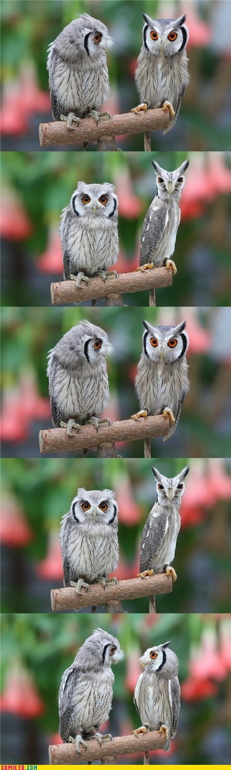 animals,eyes,look,Owl,skinny,wtf