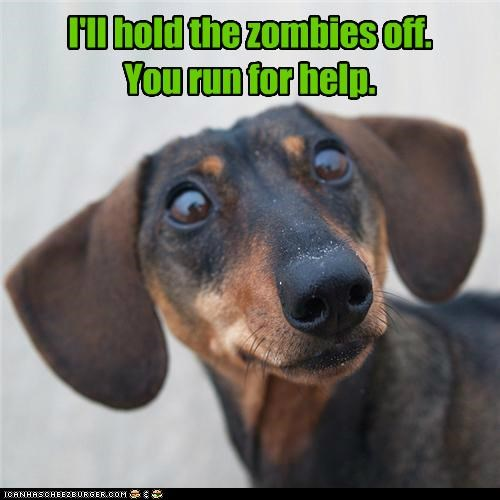 dachshund,hero,ill-handle-this,scared,shocked,zombie
