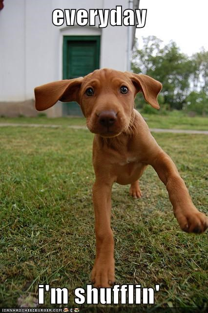 outdoors,puppy,shufflin,shuffling,vizsla,wobble