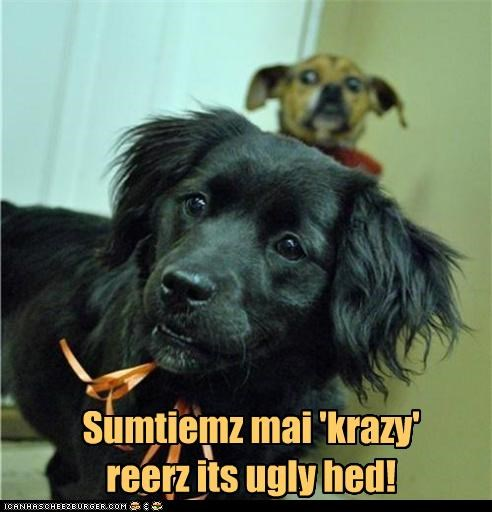crazy crazy eyes crazy side i see you labrador mixed breed photobomb puppy rears its head what is going on whatbreed - 5020052992