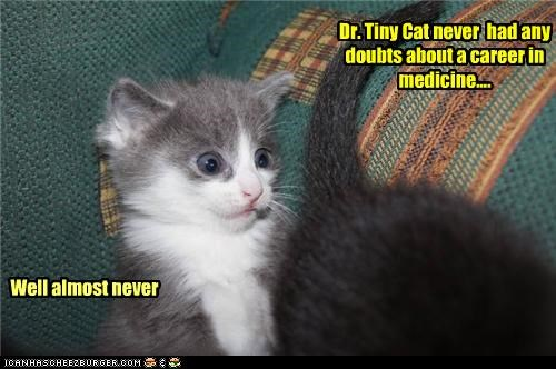 Dr. Tiny Cat never had any doubts about a career in medicine.... Well almost never