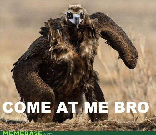 bird,bro,come at me,Memes,what