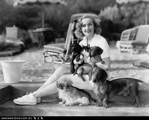 actorsa actresses boat car Carole Lombard chihuahua dachsund driving Errol Flynn famous jimmy stewart joan crawford labrador retriever mans-best-friend mixed breed outdoors pekingese pomeranian reading Silver Screen Companions Sophia Loren terrier toy poodle