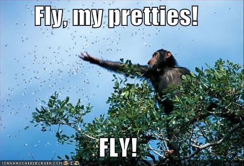 chimpanzees,flies,fly,I Can Has Cheezburger,quotes,the wizard of oz,trees