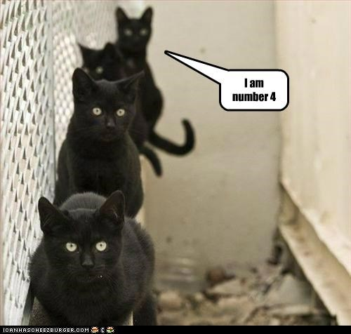 animals black cats Cats four i am number 4 I Can Has Cheezburger in a line - 5020446976