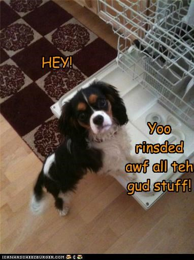 cavalier king charles spaniel,dishes,dishwasher,human food,pre-wash cycle,scraps,treats,what did you do