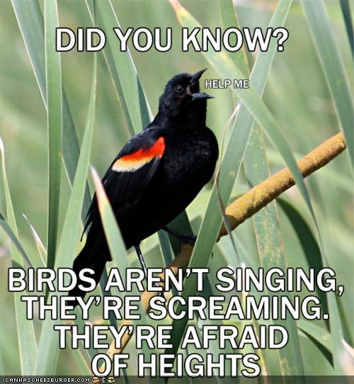 birds,caption,captioned,facts,fear,heights,screaming,singing