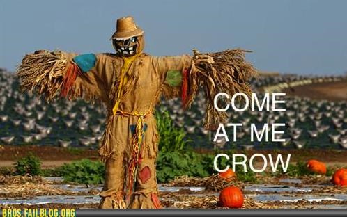 come at me bro,guido defense,Hall of Fame,home defense,Photo,scarecrow