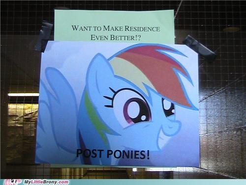 dorm more ponies rainbow dash residence - 5021336576
