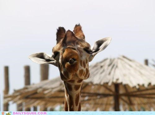 acting like animals barometer built in giraffes multipurpose Multitasking superior superiority complex tongue - 5021437440