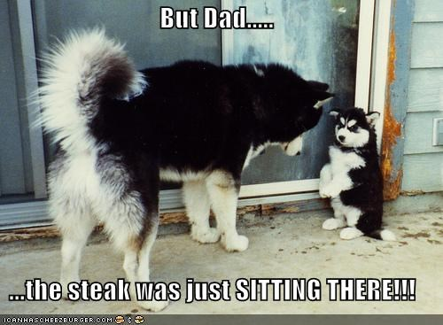 children,huskies,husky,in trouble,parent,punished,punishment,puppy,steak,what did you do