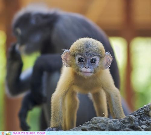 adorable,axiom,do want,Hall of Fame,literalism,monkey,monkeys-uncle,uncle