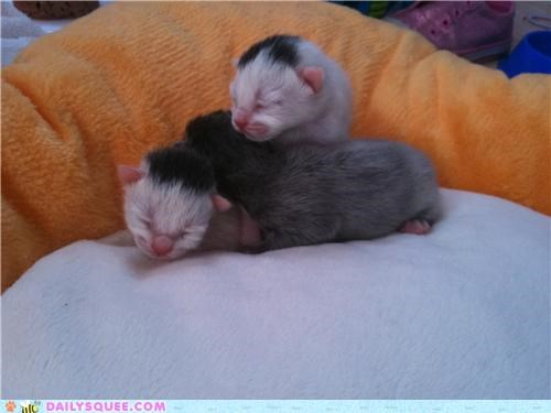Babies baby cat Cats day kitten old reader squees sleeping tiny two