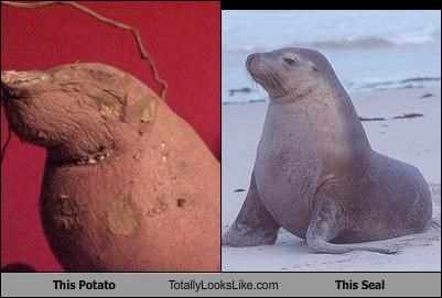 This Potato Totally Looks Like This Seal