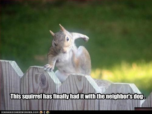 angry,caption,captioned,dogs,enough,fed up,finally,had it,neighbor,revenge,squirrel