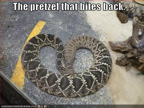 back bites biting caption captioned pretzel shape snake