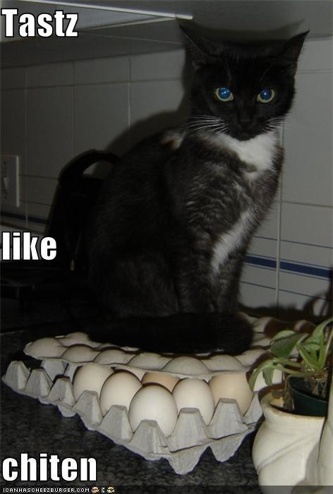 Cheezburger Image 5023301888