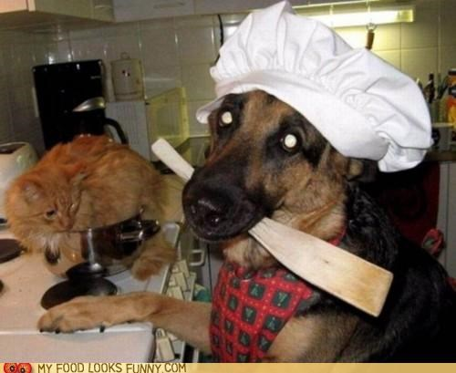 cat cooking dogs minestroni soup - 5023368704