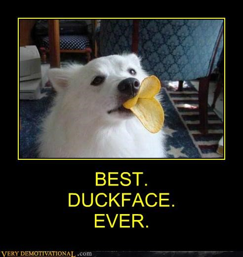 chips dogs duckface hilarious pringles - 5023428608