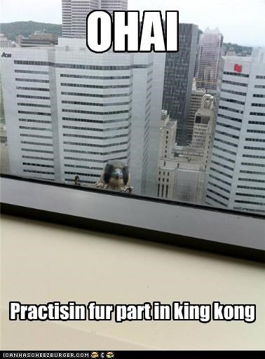 OHAI Practisin fur part in king kong