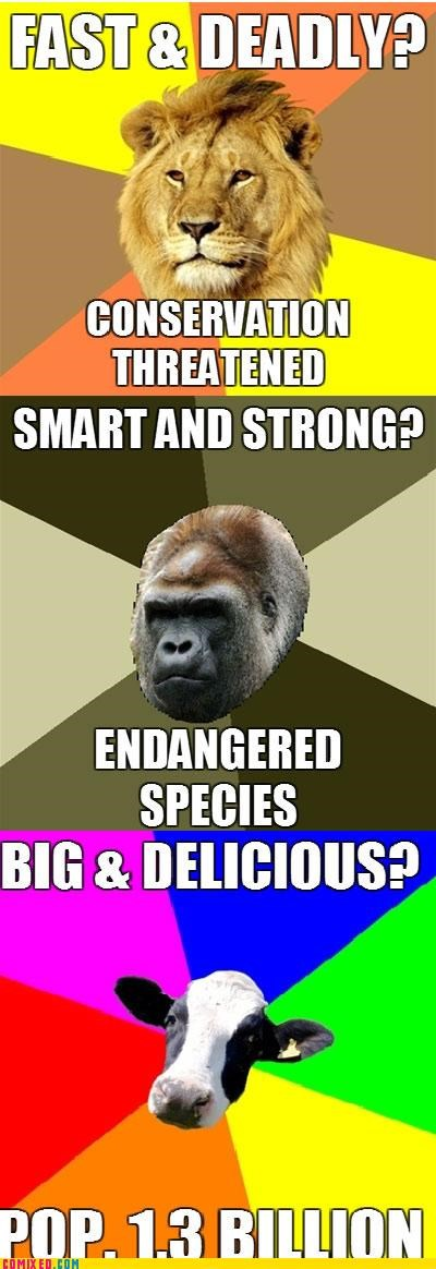 Beef cow endangered species gorilla lion the internets - 5023868928