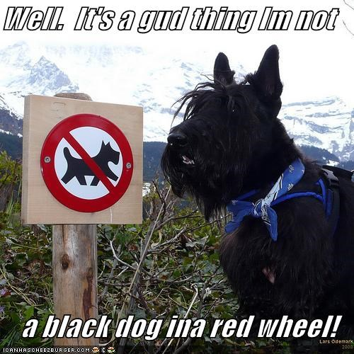 black dog,clothes,Hiking,mountains,no,no dogs allowed,outdoors,red wheel,scarf,scottish terrier,sign