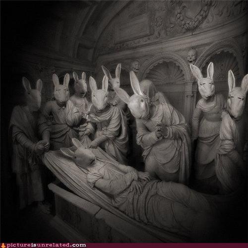 bunnies,funeral,wtf